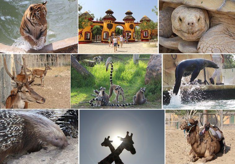 Зоопарк Фригия Тунис: как добраться, цены и отзывы