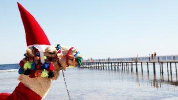 Тунис зимой: погода по месяцам и отдых в зимнее время